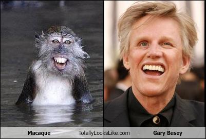 Funny Celebrity Look Alikes