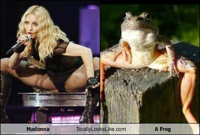 madonna-totally-looks-like-a-frog